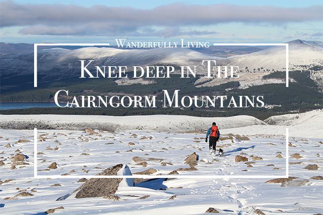knee-deep-in-the-cairngorms